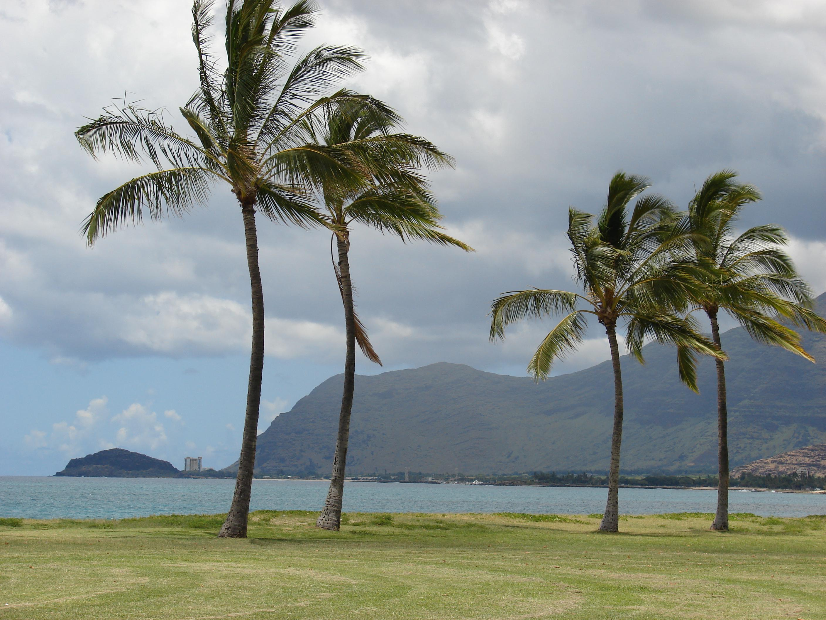 "Oahu Waianae (West) Shore<br />Photo <a href=""//creativecommons.org/licences/by/3.0/"" class=""cc-small"" target=""_blank""><img typeof=""foaf:Image"" class=""image-style-none"" src=""https://i.creativecommons.org/l/by/3.0/80x15.png"" width=""80px"" height=""15px"" alt=""Creative Commons Licence"" /></a> <a href=""http://www.flickr.com/photos/97499887@N06/9195987035/"">Forest and Kim Starr</a>"